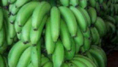 G9-Banana